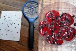 El deporte de matar moscas en Río Gallegos
