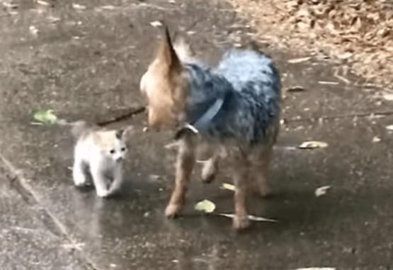 Captura de video del momento en que el perro socorre al gato.