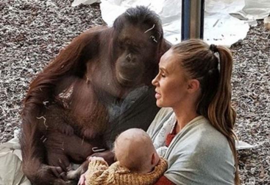Las imágenes de la orangutana se viralizaron rápidamente por la ternura de su contenido. Gentileza Daily Mail