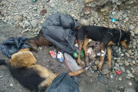 Los perros murieron intoxicados.