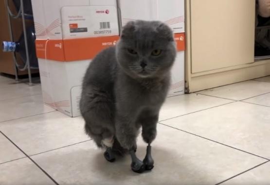 El gato con sus prótesis fueron furor en la web.