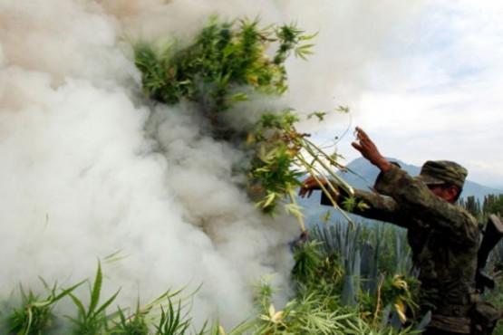 Quema de plantas de marihuana (Foto Ilustrativa)
