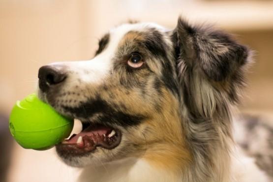 Perro con la pelota (foto ilustrativa).