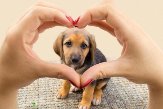 Los diez alimentos tóxicos para tu perro