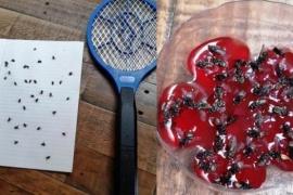 Los trabajos que está haciendo el Municipio para erradicar moscas
