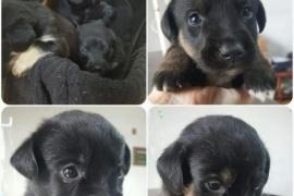 """Basualto denunciará a los """"mal nacidos"""" que abandonaron perros en su puerta"""