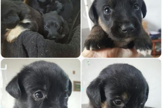 Los seis cachorros que le dejaron al veterinario.