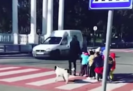 Captura de video del momento en que el perro corta el tránsito para que crucen los nenes.