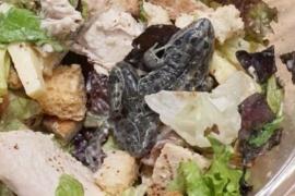 Fue a comer a un shopping y su ensalada tenía una rana muerta