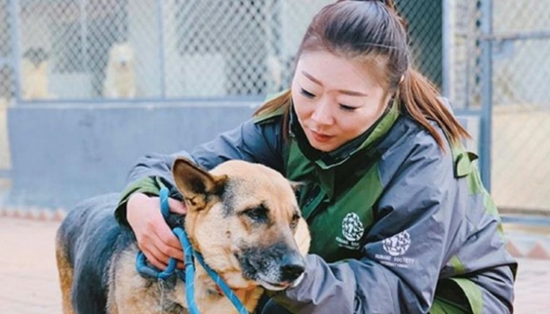 Perros abandonados en China.