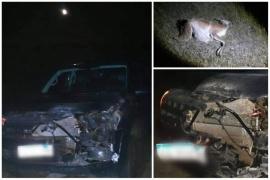 Camioneta donde viajaba Grasso colisionó contra un guanaco