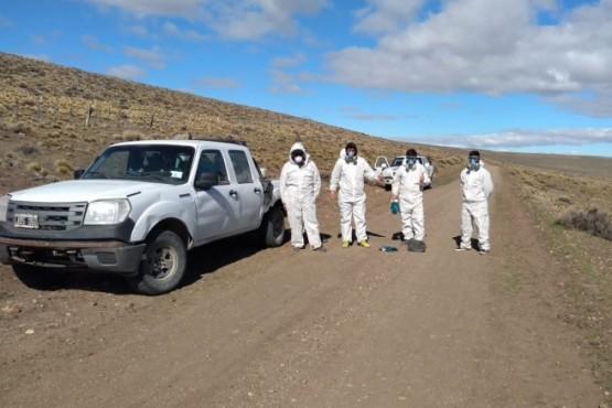 Tucuras: Chubut continúa el monitoreo para prevenir el avance