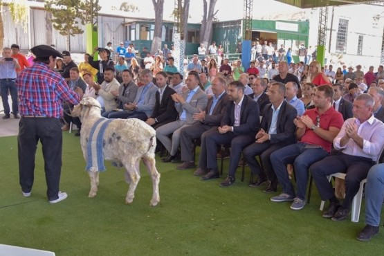 Exposicion de ovejas frente al publico.