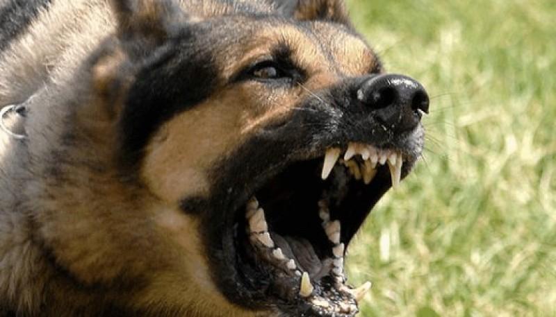 Perro mostrando los dientes.