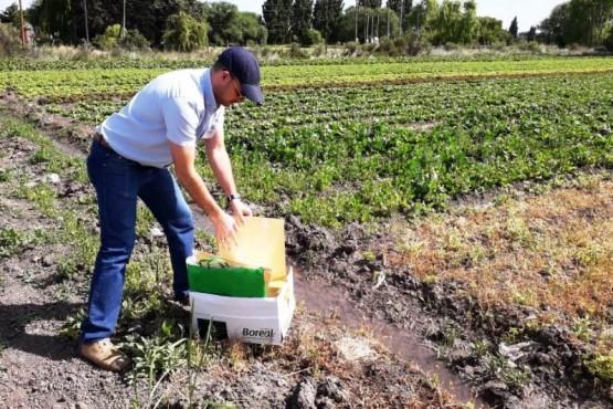 Coordinan el control fitosanitario de frutas y hortalizas
