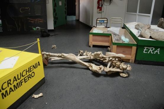 Vandalismo en el Museo.