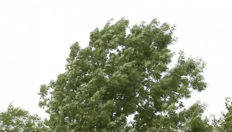 Árbol afectado por el viento (foto ilustrativa).
