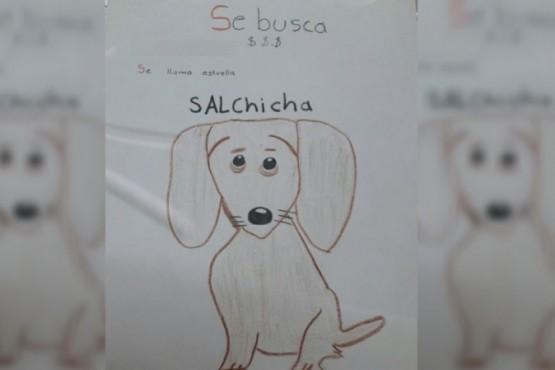 Estrella, la perra que busca el niño de 11 años.