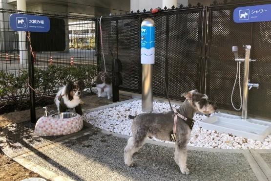 Aeropuerto inauguró baños para perros