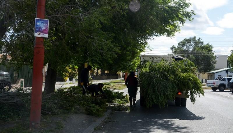 Caída de árbol. (F.C)