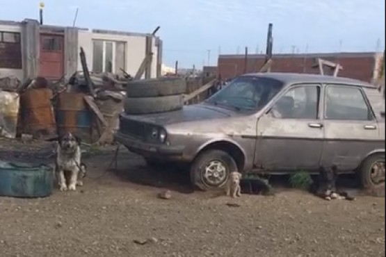 Animales en el barrio Ayres Argentinos.