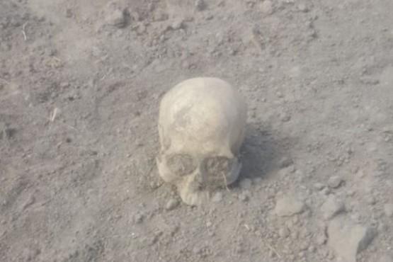 Encontraron restos óseos en una chacra