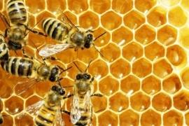 Recuerdan a productores apícolas monitorear colmenas