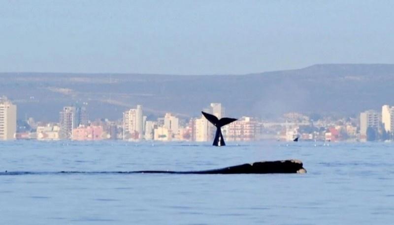 El clima en Puerto Madryn.