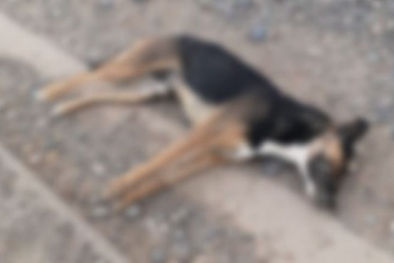 Vecinos denuncian casos de perros envenenados