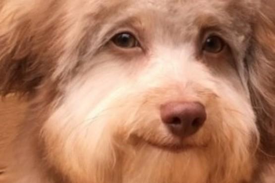Perro.
