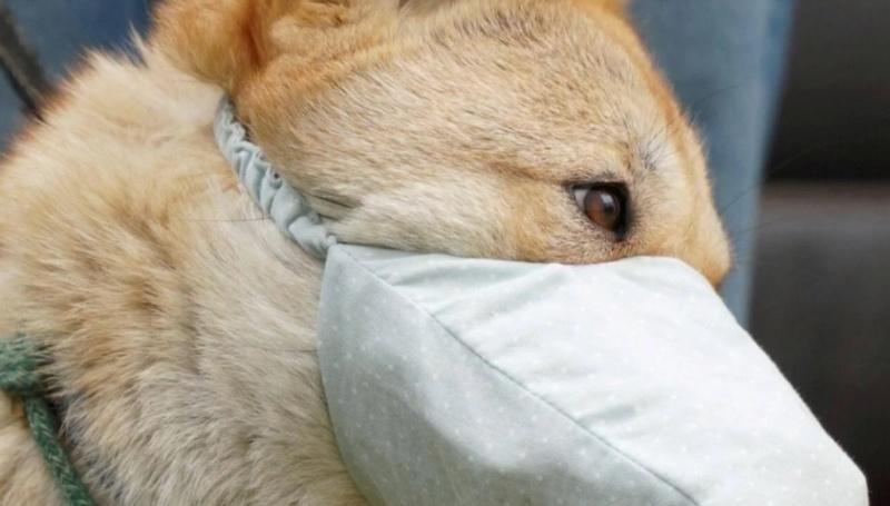 Murió el primer perro por Coronavirus.