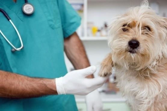 Reconocer la labor veterinaria en este contexto de Emergencia Sanitaria