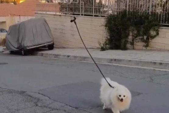 Paseó a su perro con un drone para respetar la cuarentena