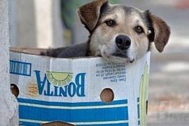 El lado B de la pandemia: Qué pasa con los perros callejeros