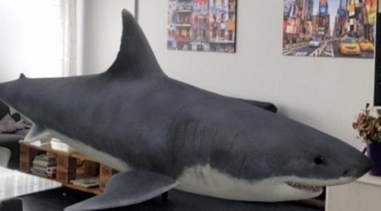 El tiburón que podes ver con Google.
