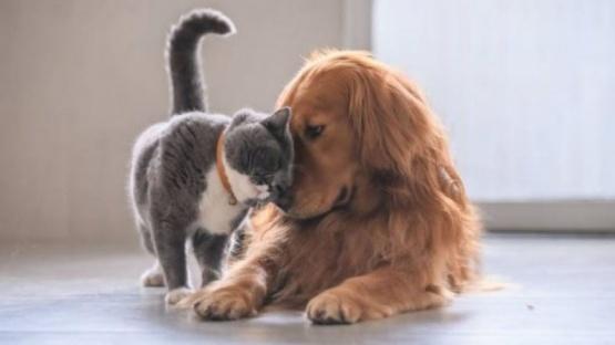 Desinfectar patas de las mascotas las perjudica