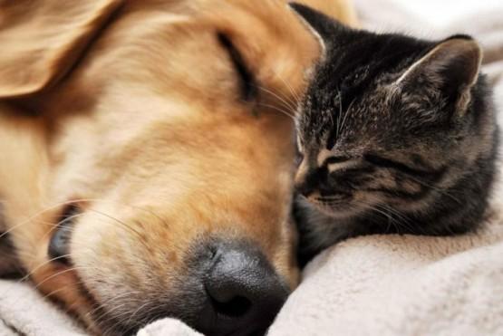 No acudir al veterinario, excepto por urgencias.