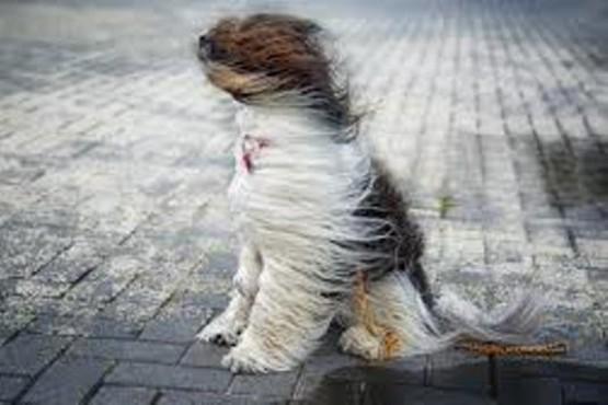 ¡Quédate en casa! Alerta meteorológico para el sur