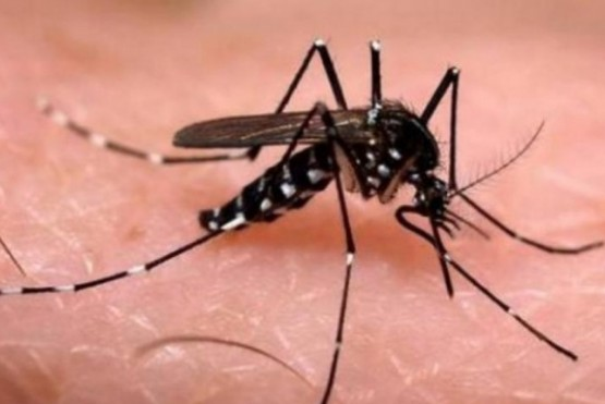 Aumentaron los casos de dengue en Córdoba