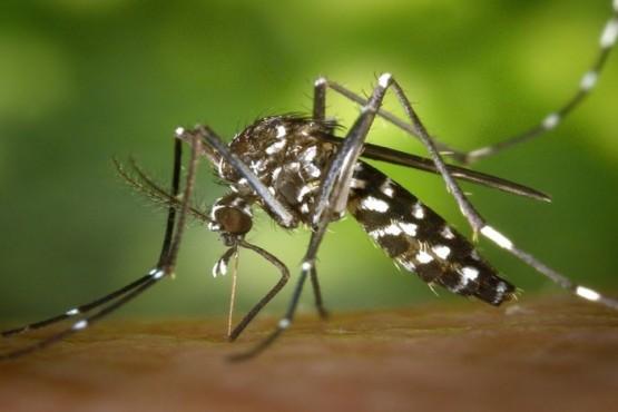 El dengue también está presente en la sociedad La sintomatología que presentan los enfermos incluye fiebre acompañada de dolor detrás de los ojos, dolor de cabeza, muscular y de articulaciones; náuseas y vómitos, cansancio intenso, manchas en la piel, picazón y/o sangrado de nariz y encías.  Además de la pandemia de COVID-19 que hoy azota a la humanidad, el dengue una enfermedad transmitida por el mosquito Aedes aegypti, también pone en jaque al sistema de sanitario argentino
