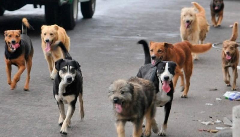 Perros en el centro de la ciudad.