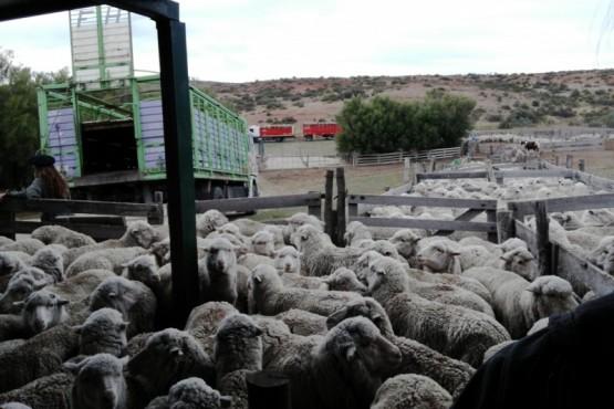 Productores ganaderos.