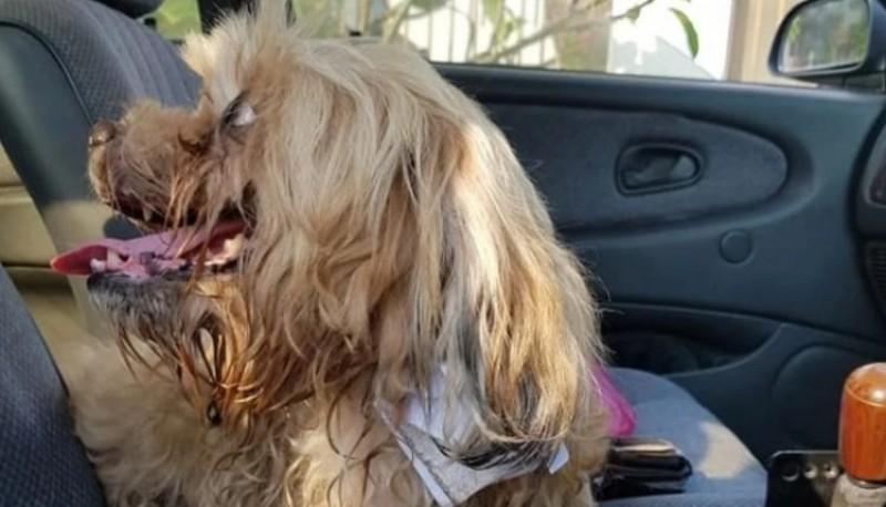 Salvó a un perro abandonado que llevaba atada una desgarradora nota en su collar