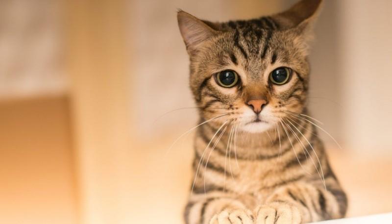 Un estudio reveló que los gatos sufren de ansiedad al separarse de sus dueños
