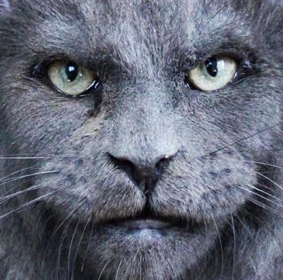 """Un gato con """"rostro humano"""" conmociona a las redes por su apariencia"""