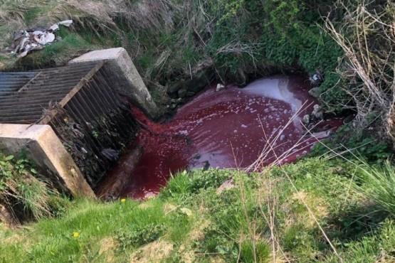 """Las impactantes imágenes de un """"río de sangre"""" a pocos metros de un matadero"""