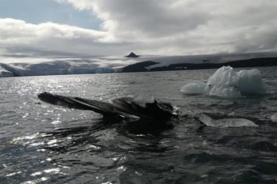Encontraron toxinas de origen natural en la Antártida: qué significa para la humanidad