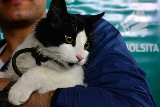 Por qué se celebra hoy el Día del Animal en Argentina