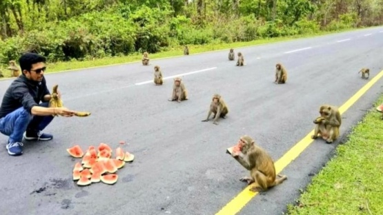 Monos con