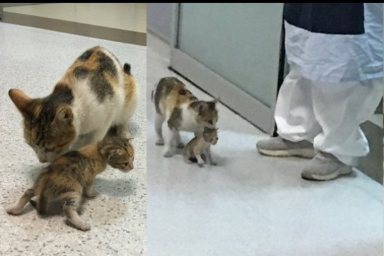 Una gata callejera llevó a su cría hasta la guardia de un hospital y logró que la ayuden